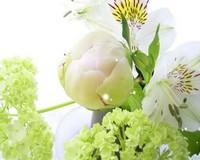 Обои-цветы.Скачать картинку