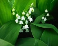 Обои-цветы