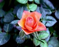 Цветочки-обои