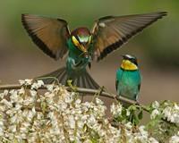 Птички-обои.Скачать картинку