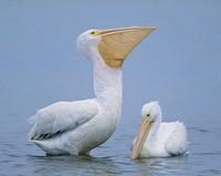 Обои-птички.Скачать картинку